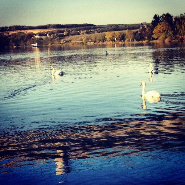 река и лебеди в городе Ремих